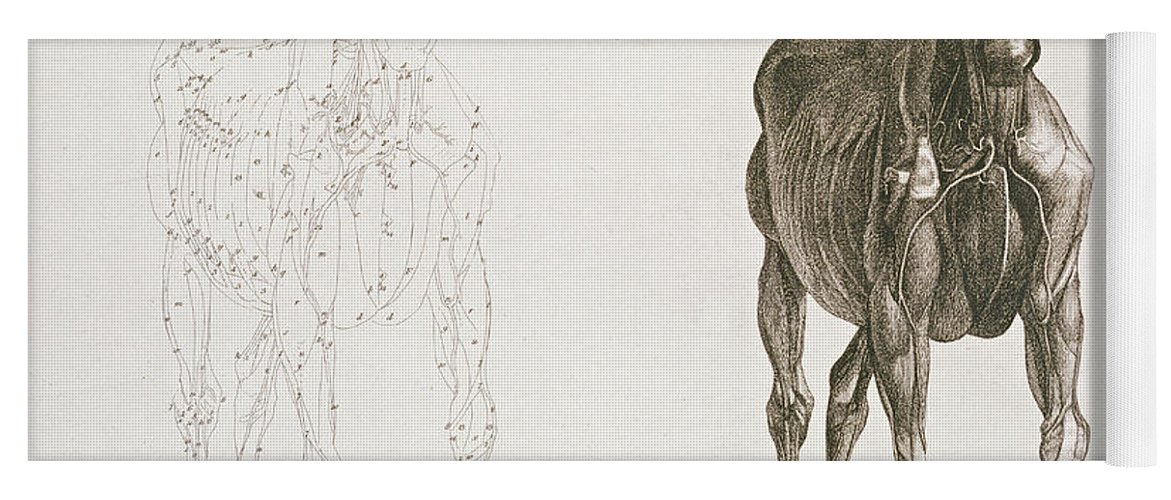 Unique George Stubbs The Anatomy Of The Horse Pattern - Anatomy And ...
