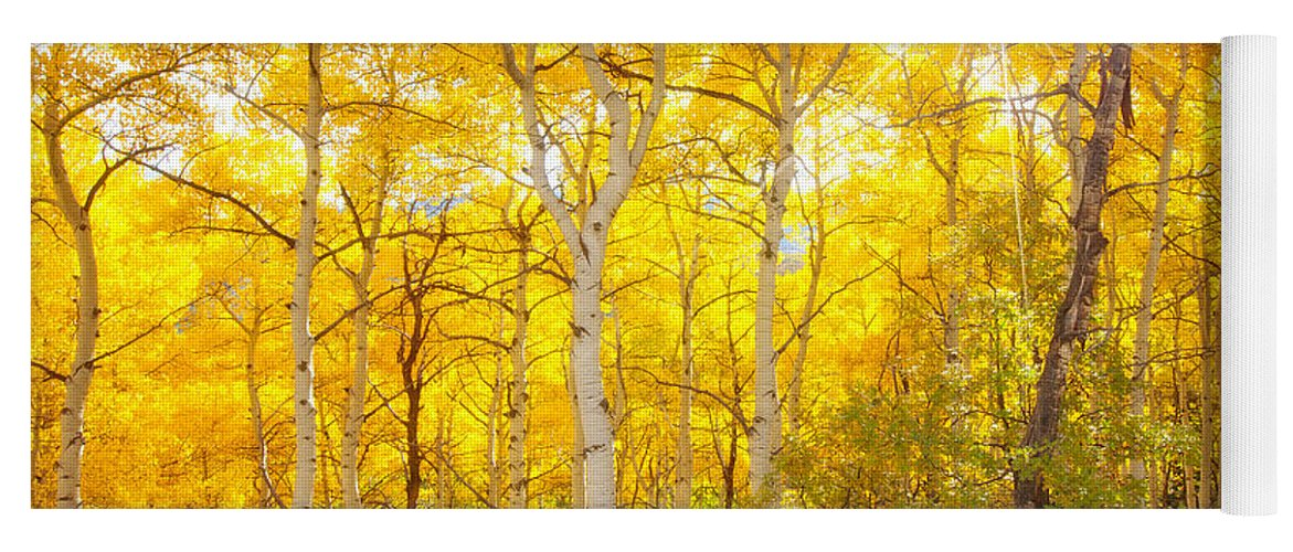 Aspens Yoga Mat featuring the photograph Aspen Morning by Darren White