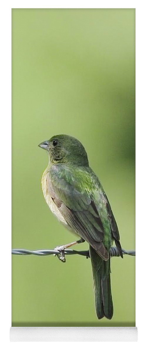 Animal Yoga Mat featuring the photograph Female Painted Bunting by Robert Frederick