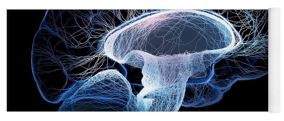 Brain Yoga Mat featuring the photograph Human Brain Complexity by Johan Swanepoel