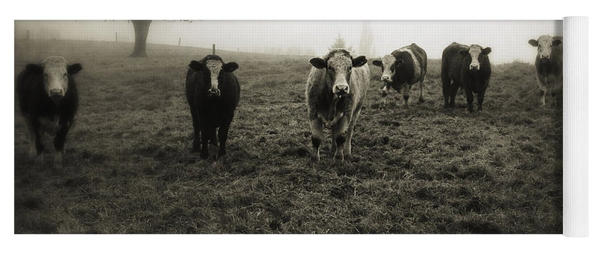 Fog Yoga Mat featuring the photograph Livestock by Les Cunliffe