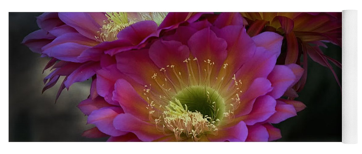 Night Blooming Cactus Yoga Mat featuring the photograph The Beauty Of The Desert by Saija Lehtonen
