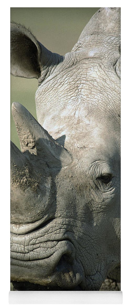 Feb0514 Yoga Mat featuring the photograph White Rhinoceros Portrait by San Diego Zoo