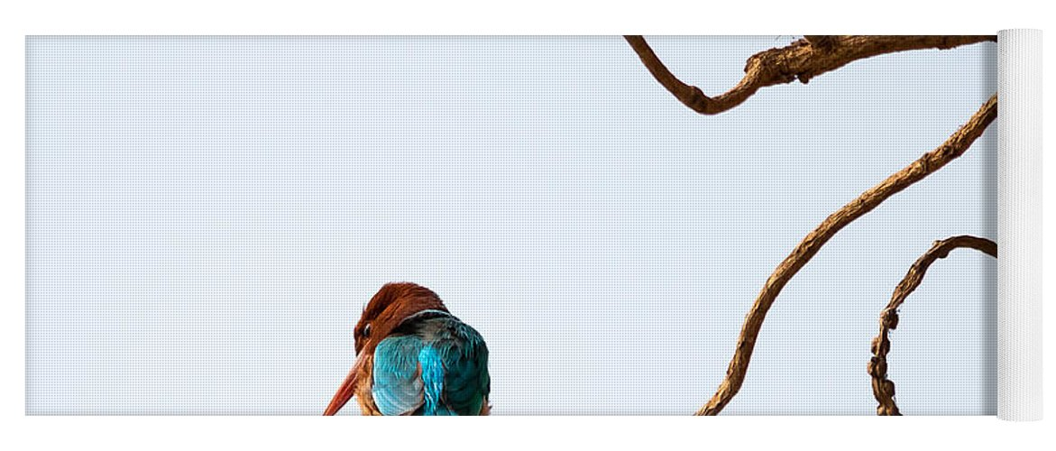 Smyrna Kingfisher Yoga Mat featuring the photograph White-throated Kingfisher by Gaurav Singh