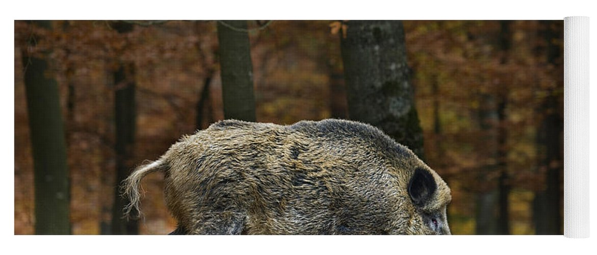 Wild Boar Yoga Mat featuring the photograph 121213p284 by Arterra Picture Library