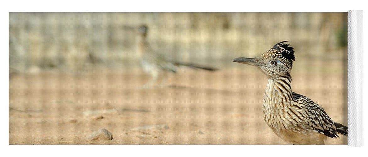 Animal Yoga Mat featuring the photograph Greater Roadrunner by Scott Linstead