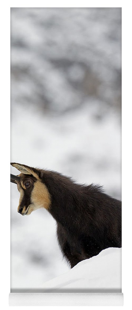 Chamois Yoga Mat featuring the photograph 130201p229 by Arterra Picture Library