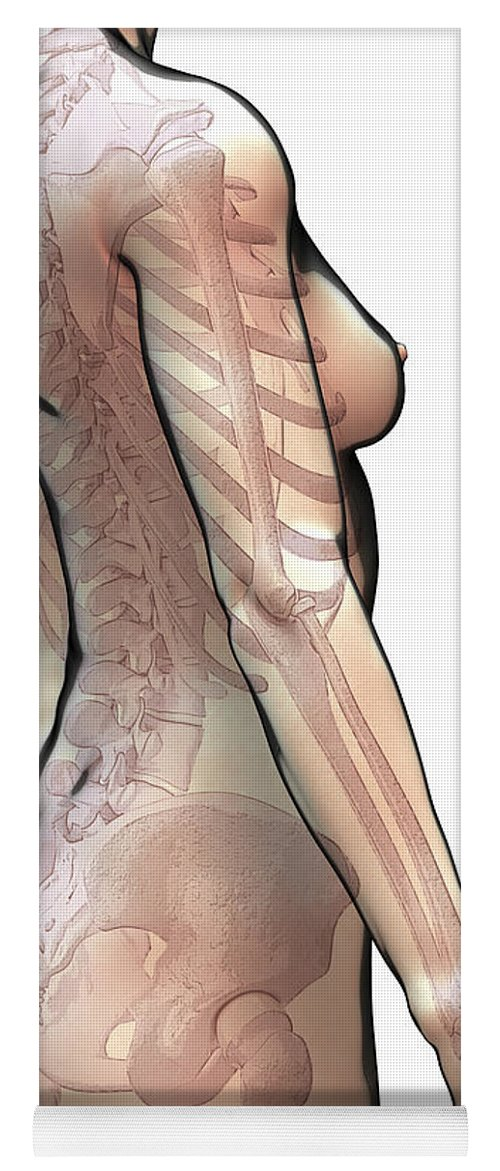 Digitally Generated Image Yoga Mat featuring the photograph Bones Of The Upper Body Female by Science Picture Co