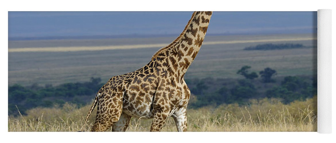 Africa Yoga Mat featuring the photograph Common Giraffe by John Shaw