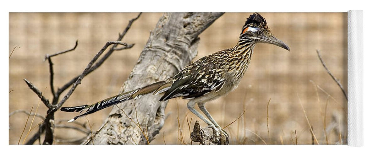 Animal Yoga Mat featuring the photograph Greater Roadrunner by Craig K. Lorenz