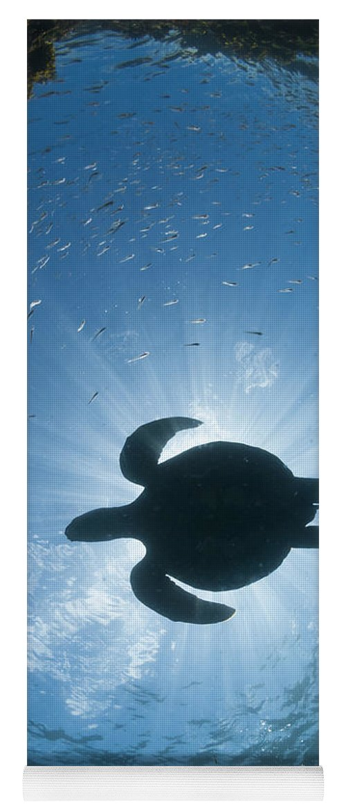 536791 Yoga Mat featuring the photograph Green Sea Turtle Galapagos Islands by Tui De Roy