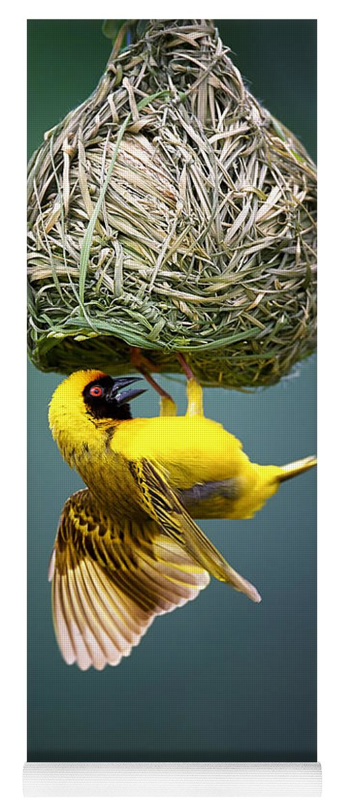 Africa Yoga Mat featuring the photograph Masked Weaver At Nest by Johan Swanepoel
