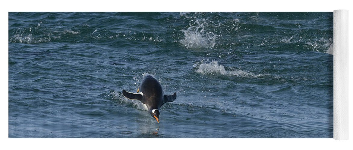 Nature Yoga Mat featuring the photograph Gentoo Penguin by John Shaw
