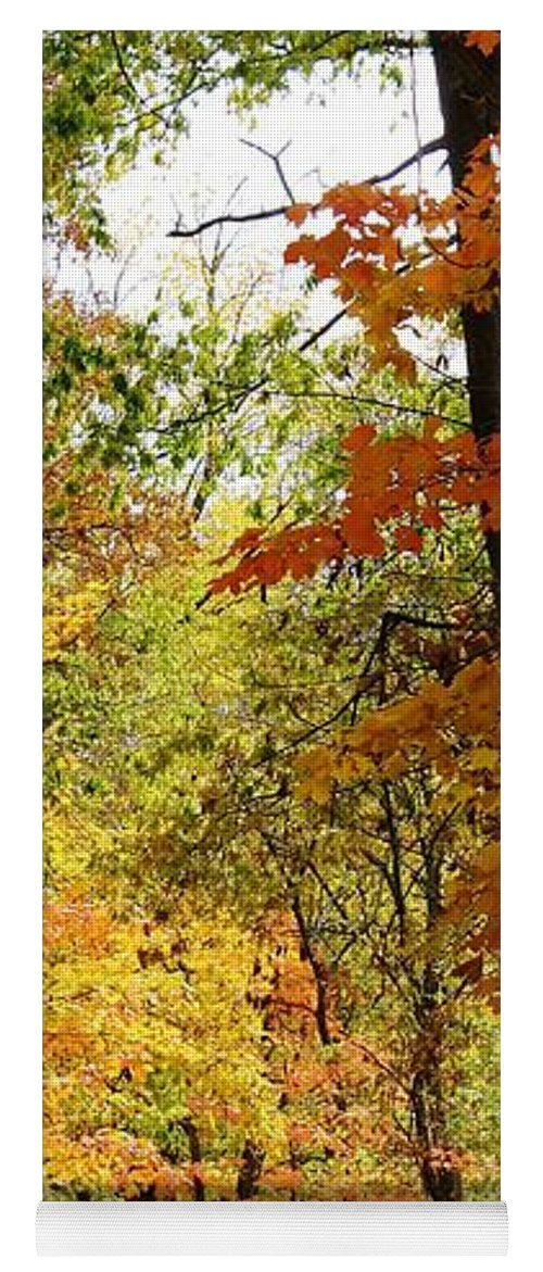 Woodland Yoga Mat featuring the photograph A Drive Through The Woods by Bruce Bley