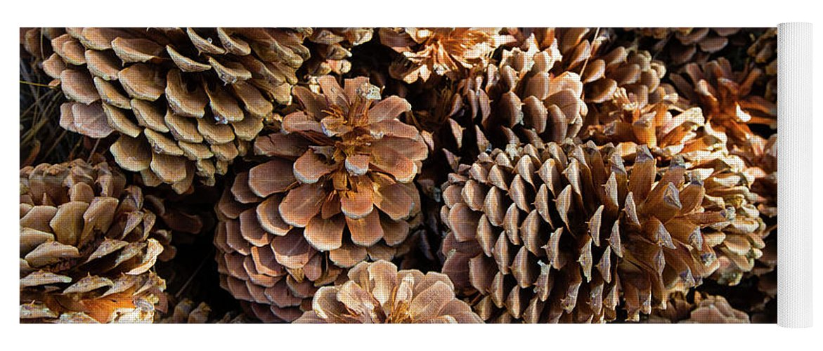 Photography Yoga Mat featuring the photograph Acorns Growing On Plants by Panoramic Images