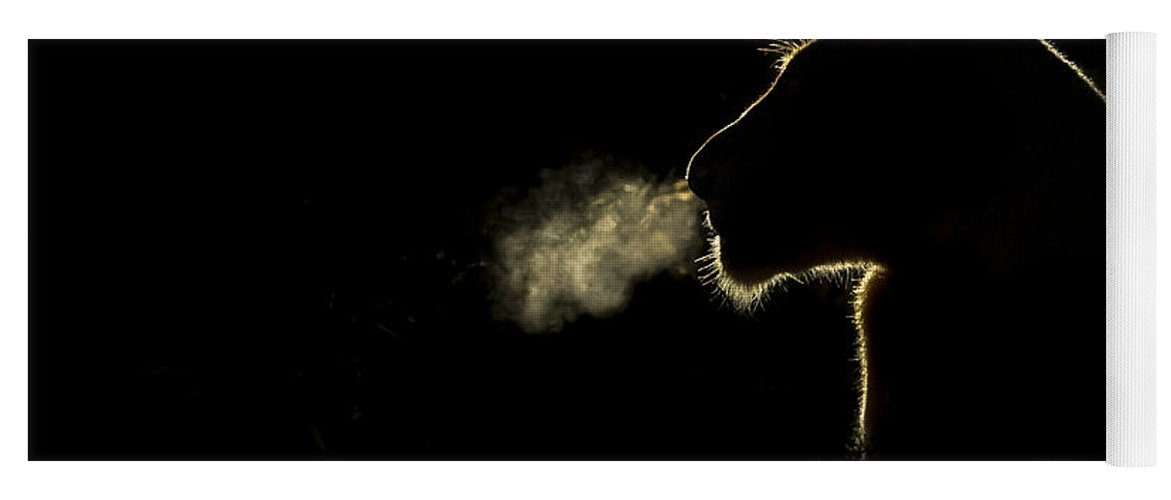 Nis Yoga Mat featuring the photograph African Lioness Breath Sabi Sands South by Brendon Cremer