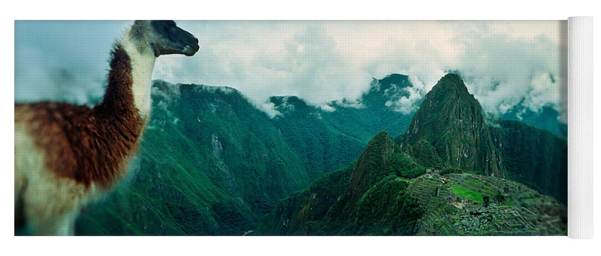 Photography Yoga Mat featuring the photograph Alpaca Vicugna Pacos On A Mountain by Panoramic Images