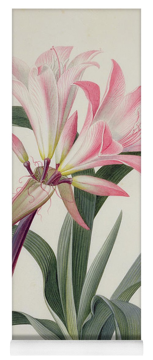 Belladonna Lily Yoga Mat featuring the painting Amaryllis Belladonna, 1761 by Georg Dionysius Ehret