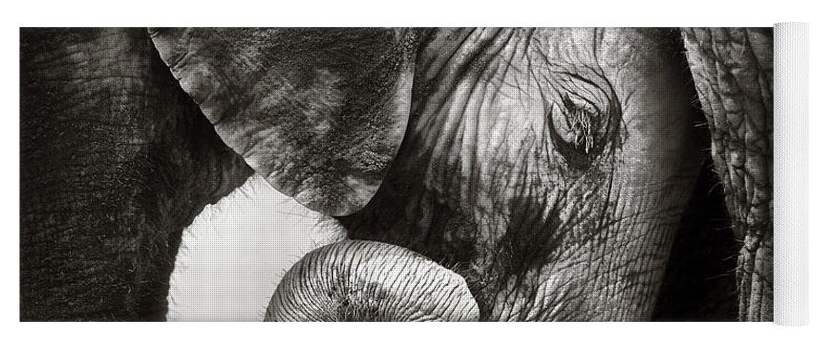 Elephant Yoga Mat featuring the photograph Baby elephant seeking comfort by Johan Swanepoel
