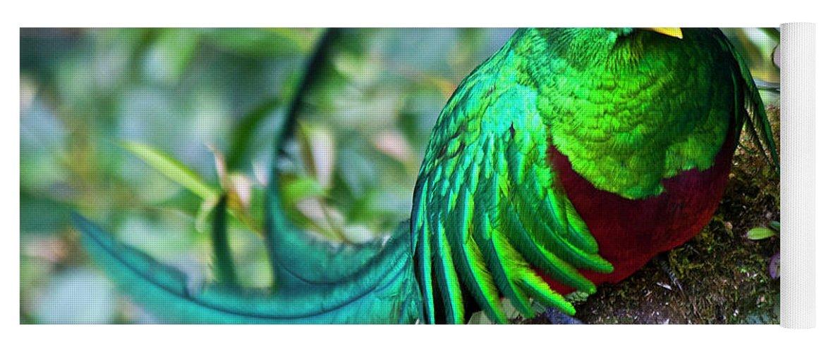 Quetzal Yoga Mat featuring the photograph Beautiful Quetzal 4 by Heiko Koehrer-Wagner
