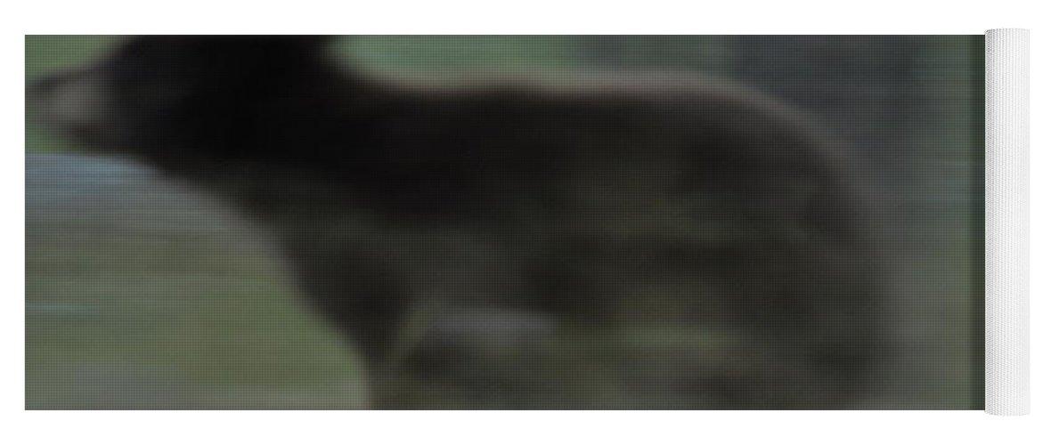 Black Bear Yoga Mat featuring the photograph Black Bear Cub Running by Frank Madia
