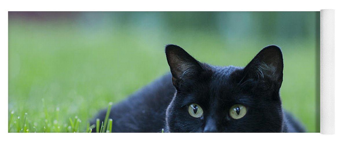 Animal Yoga Mat featuring the photograph Black Cat by Juli Scalzi