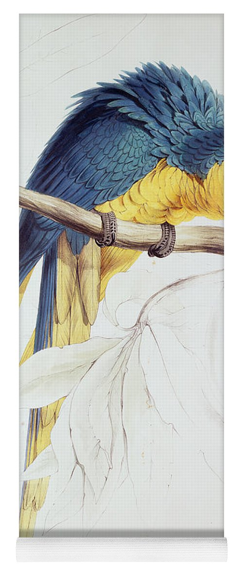 Parrot Yoga Mat featuring the painting Blue And Yellow Macaw by Edward Lear