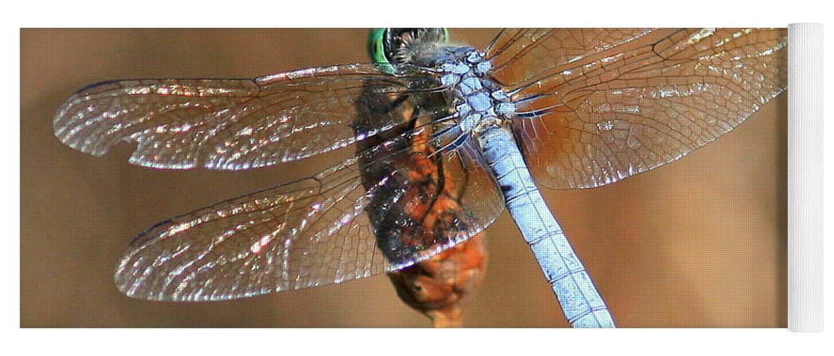 Dragonfly Yoga Mat featuring the photograph Blue Dragonfly Square by Carol Groenen