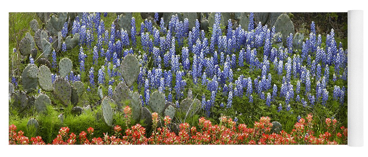 00442674 Yoga Mat featuring the photograph Bluebonnets Paintbrush And Prickly Pear by Tim Fitzharris