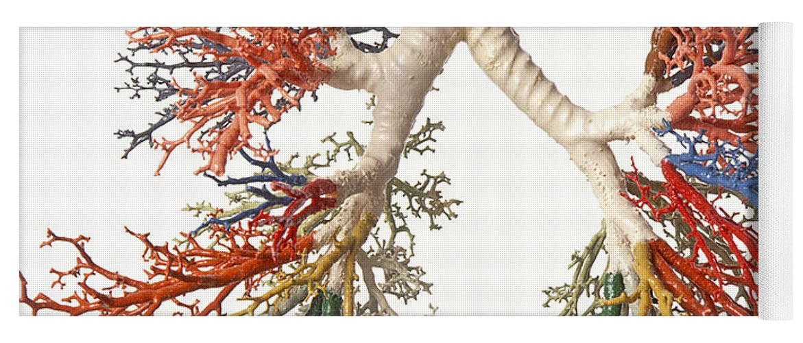 Bronchial Tree, Model Yoga Mat for Sale by Dave King / Dorling ...