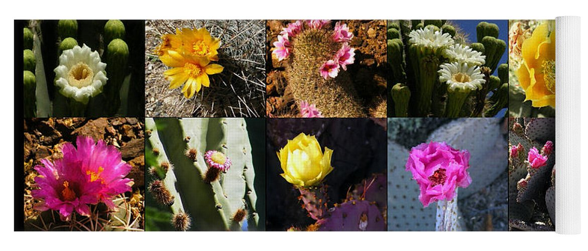 Flowers Yoga Mat featuring the photograph Cactus Collage by Marilyn Smith