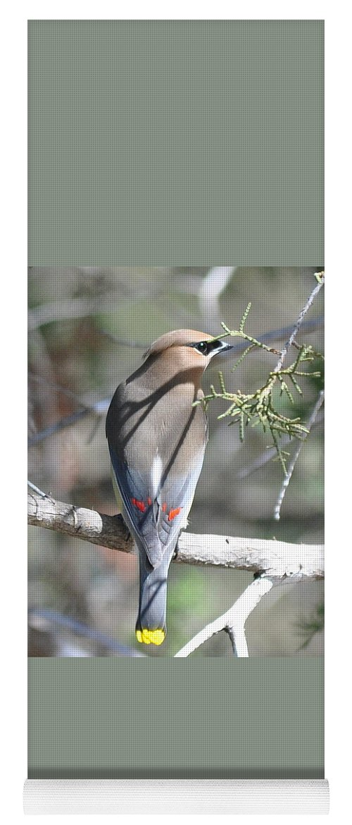Cedar Waxwing Yoga Mat featuring the photograph Cedar Waxwing by Frank Madia