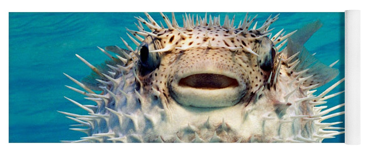 Photography Yoga Mat featuring the photograph Close-up Of A Puffer Fish, Bahamas by Panoramic Images