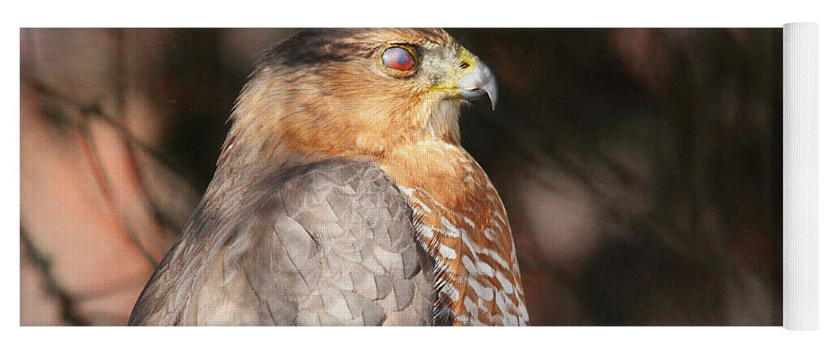 Hawk Yoga Mat featuring the photograph Coopers Hawk In Profile by Debbie Oppermann