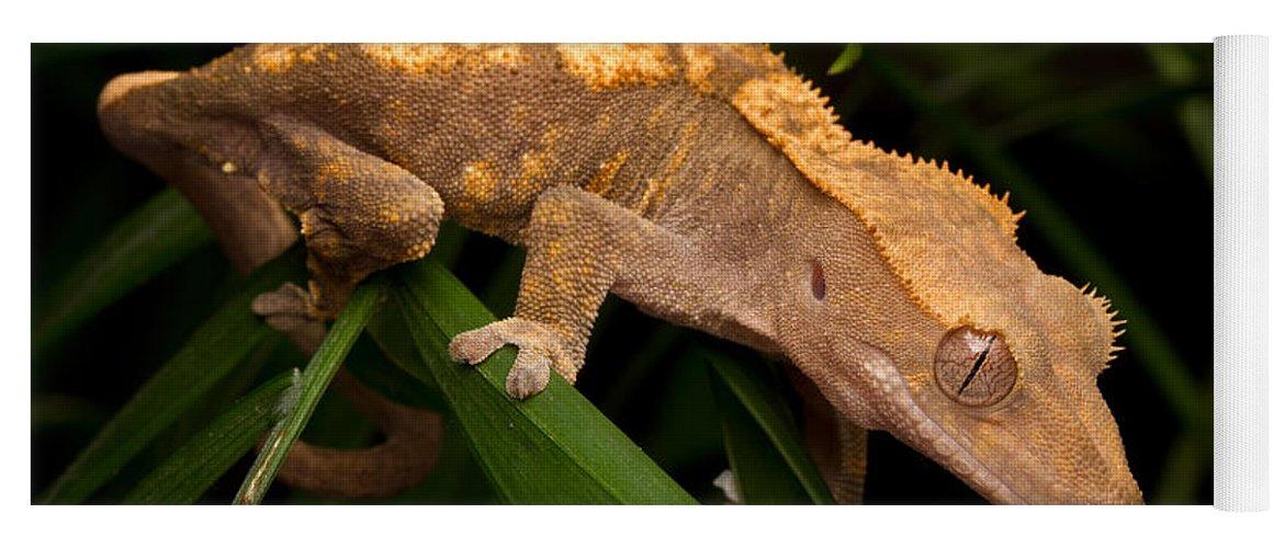 Crested Gecko Rhacodactylus Ciliatus Yoga Mat