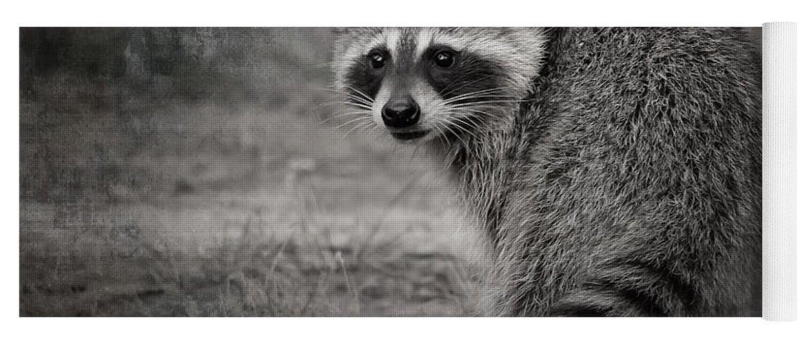Raccoon Yoga Mat featuring the photograph Critter Corner by Kim Henderson