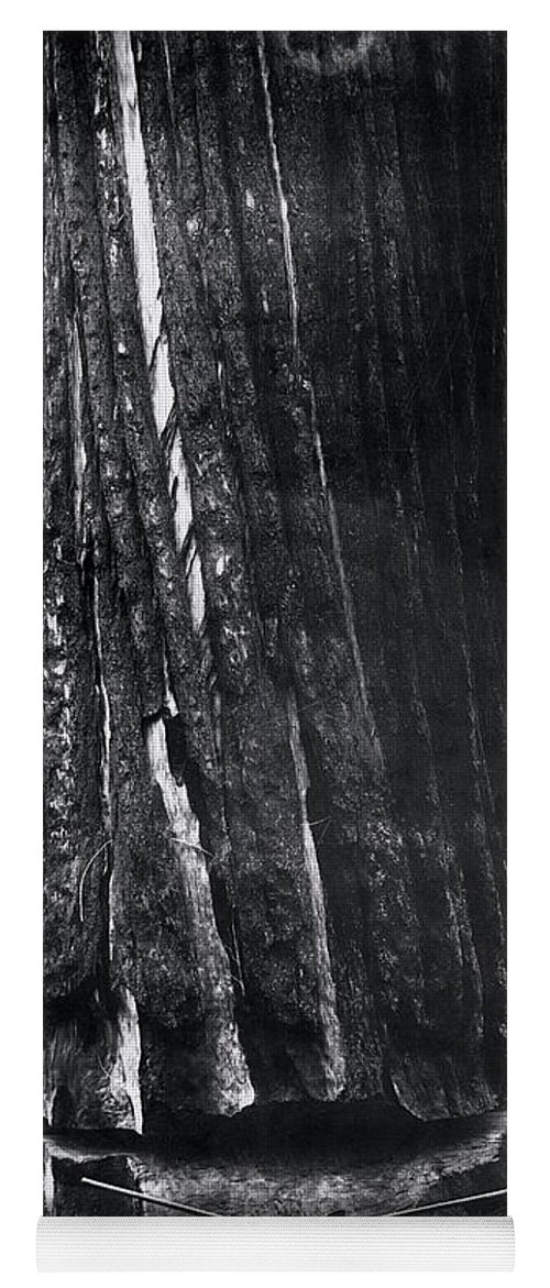 Lumberjack Yoga Mat featuring the photograph Crosscut Sawing A Giant Redwood 1893 by Daniel Hagerman