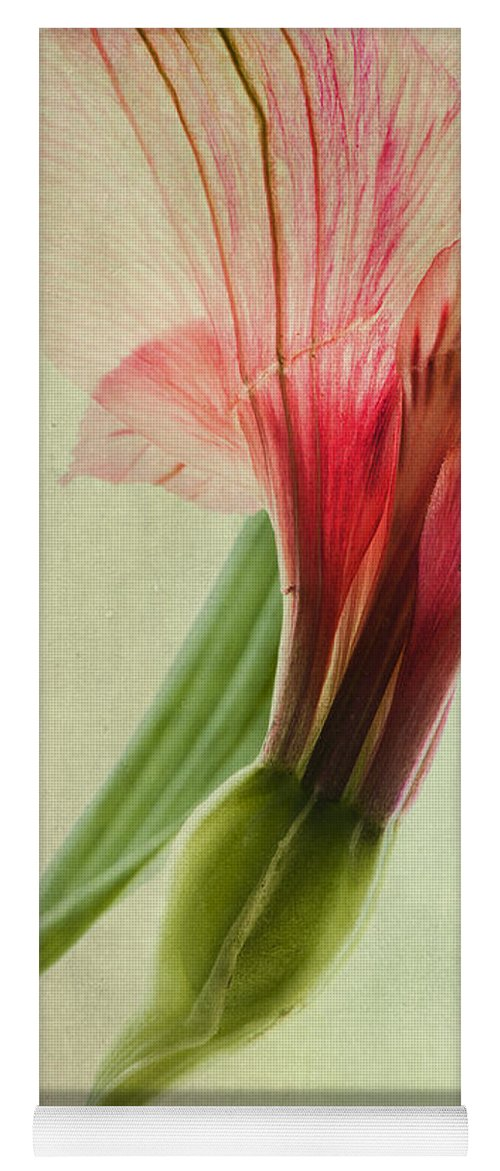 Peruvian Lily Yoga Mat featuring the photograph Dim Colours by Priska Wettstein