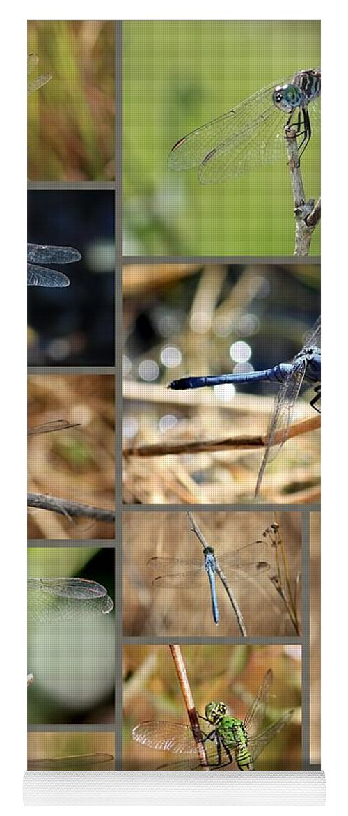 Dragonflies Yoga Mat featuring the photograph Dragonfly Collage by Carol Groenen