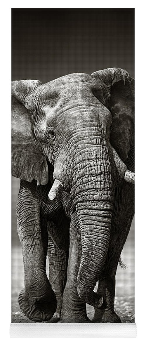 Elephant Yoga Mat featuring the photograph Elephant approach from the front by Johan Swanepoel