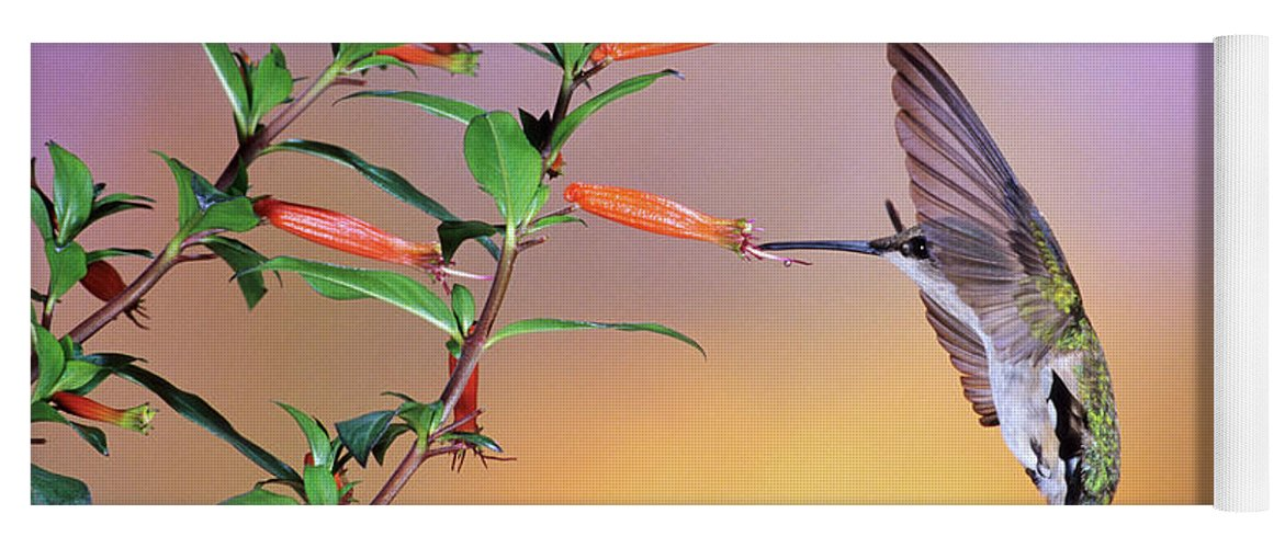Photography Yoga Mat featuring the photograph Female Ruby-throated Hummingbird by Animal Images