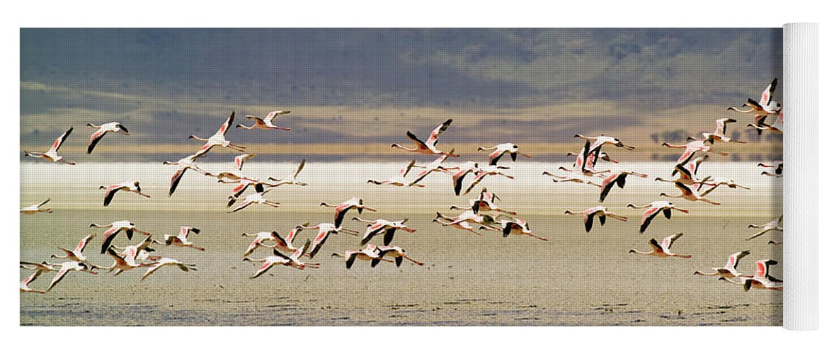 Action Yoga Mat featuring the photograph Flamingos Flying Over Water by Jonathan Kingston