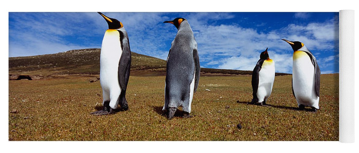 Photography Yoga Mat featuring the photograph Four King Penguins Standing by Panoramic Images