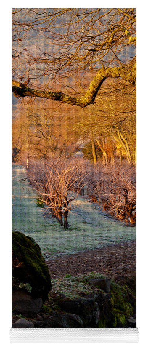 Oak Yoga Mat featuring the photograph Frost In The Valley Of The Moon by Bill Gallagher