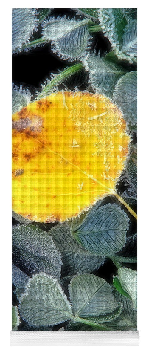 First Frost Yoga Mat featuring the photograph Gold On Green by Bill Morgenstern