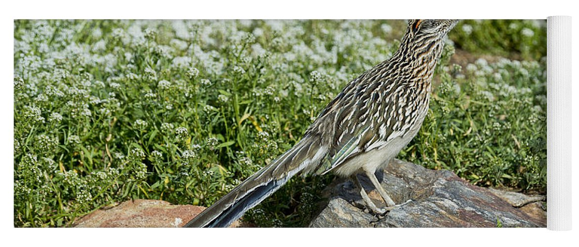 Greater Roadrunner Yoga Mat featuring the photograph Greater Roadrunner by Anthony Mercieca