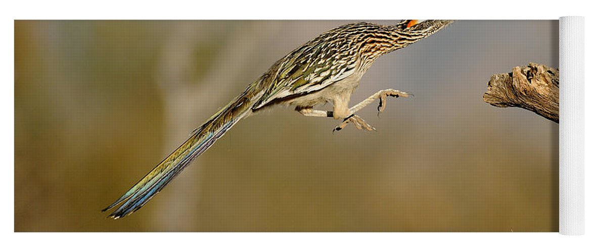 Animal Yoga Mat featuring the photograph Greater Roadrunner Leaping by Scott Linstead