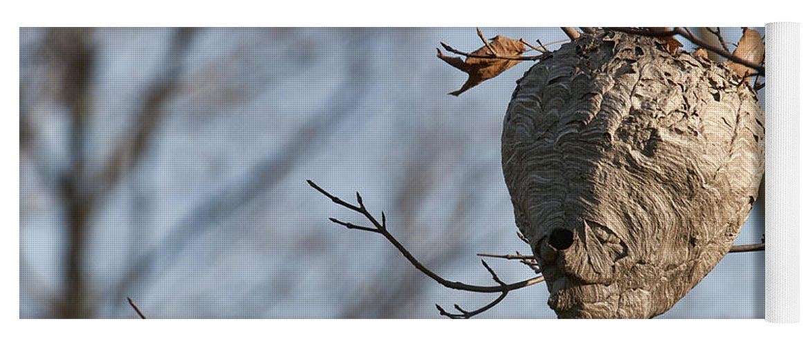 Hornets Nest Yoga Mat featuring the photograph Hornets Nest by David Arment