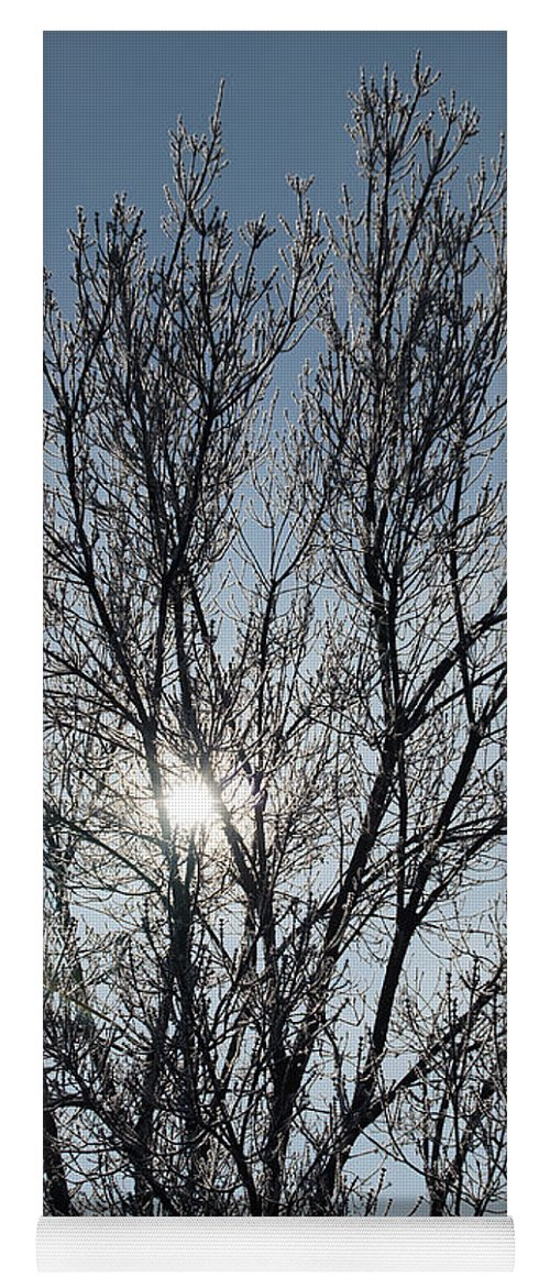 Icy Yoga Mat featuring the photograph Icy Tree - Winter Morning by Mick Anderson