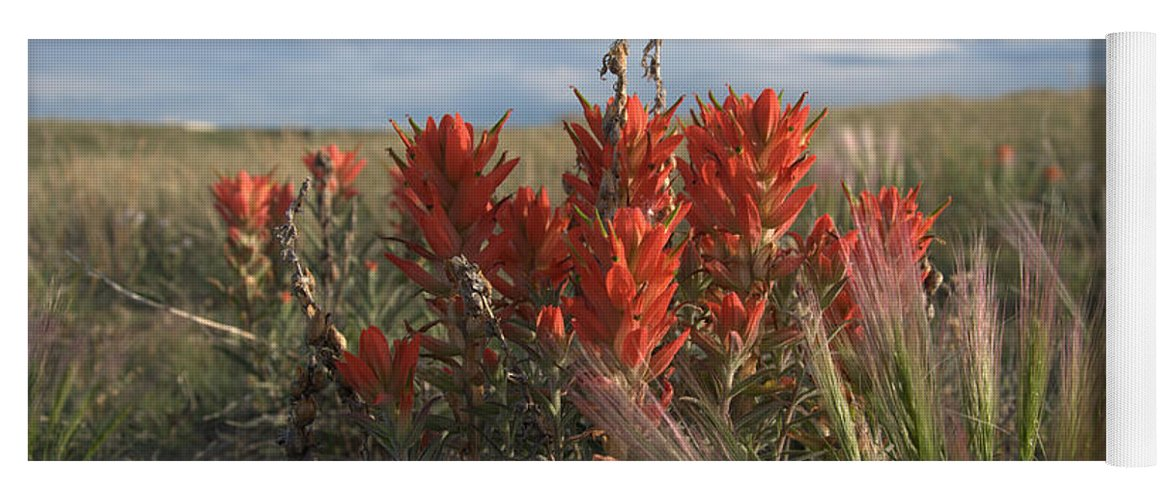 Flower Yoga Mat featuring the photograph Indian Paintbrush by Frank Madia